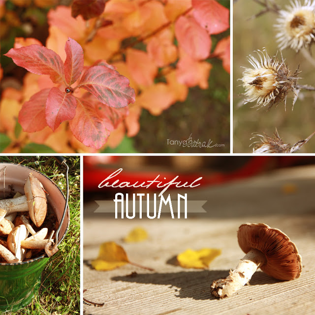 Beautiful Autumn Photos